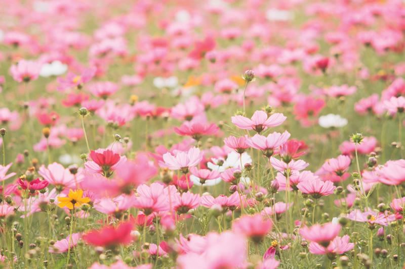 ערב זמר: בשביל הפריחה